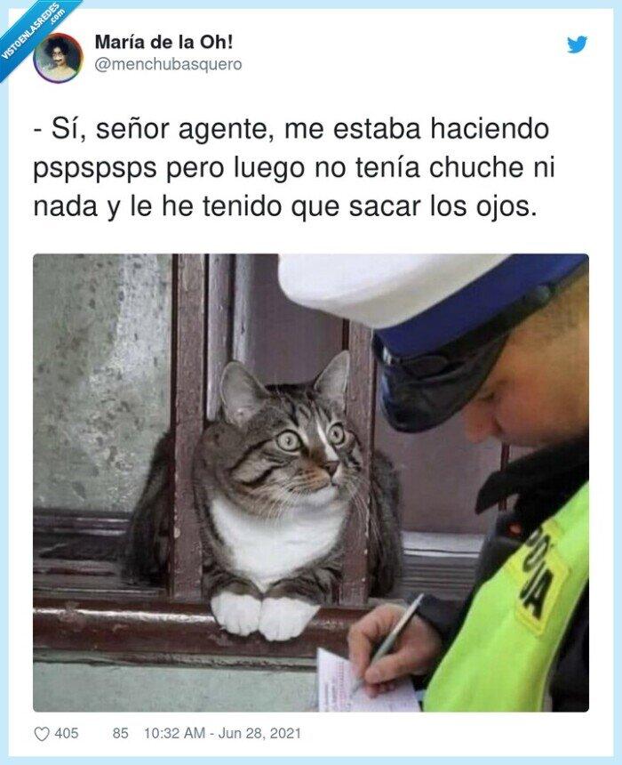 agente,chuches,gato,pspspsps