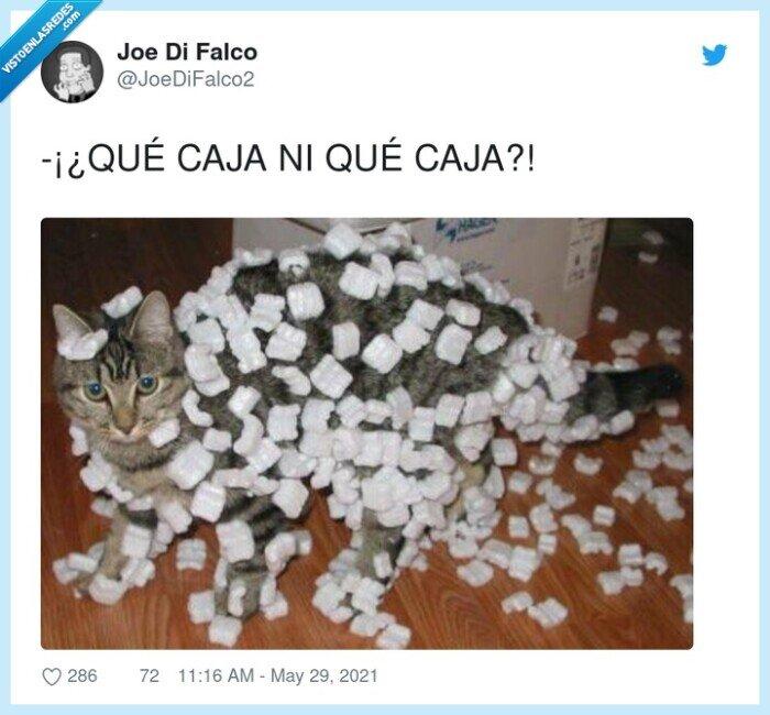 caja,forespan,gato