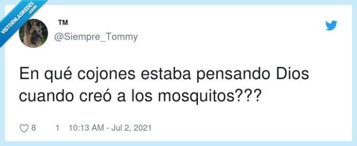 creación,dios,mosquitos,pensar