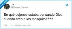 Enlace a Al menos creó el Raid, le encanta vernos pelearnos con ellos, por @Siempre_Tommy