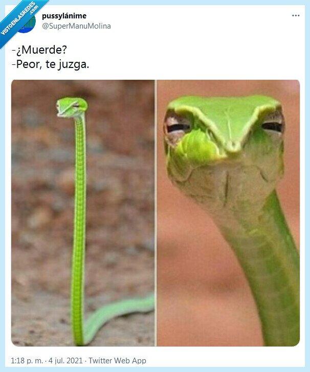 juzgar,morder,serpiente
