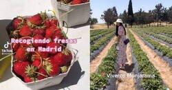 Enlace a Alguien muy listo ha inventado esto: engaña a pijos para que recojan fresas ellos solos al sol y las paguen a precio normal, por @Sugusdpinya