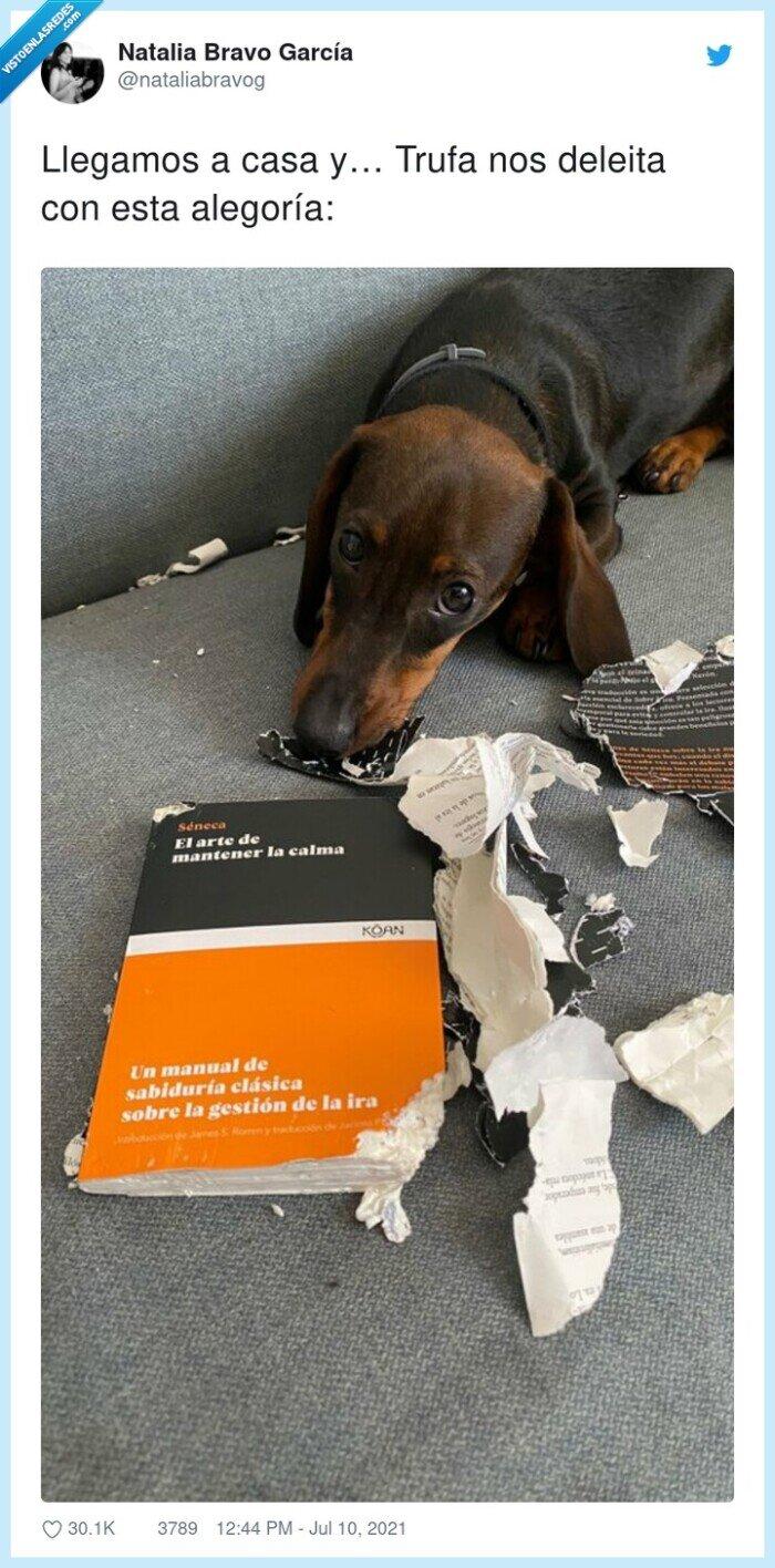 alegoría,casa,deleita,destrozar,libro,llegamos,perro,trufa