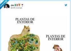 Enlace a Plantas, por @JM_Canga
