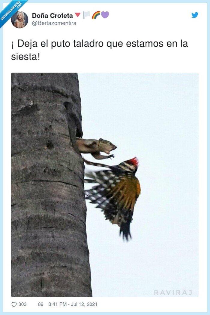 ardilla,pájaro carpintero,siesta,taladro,tronco