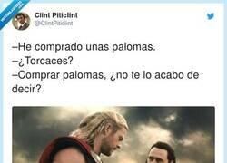Enlace a Palomas torcaces, por @ClintPiticlint
