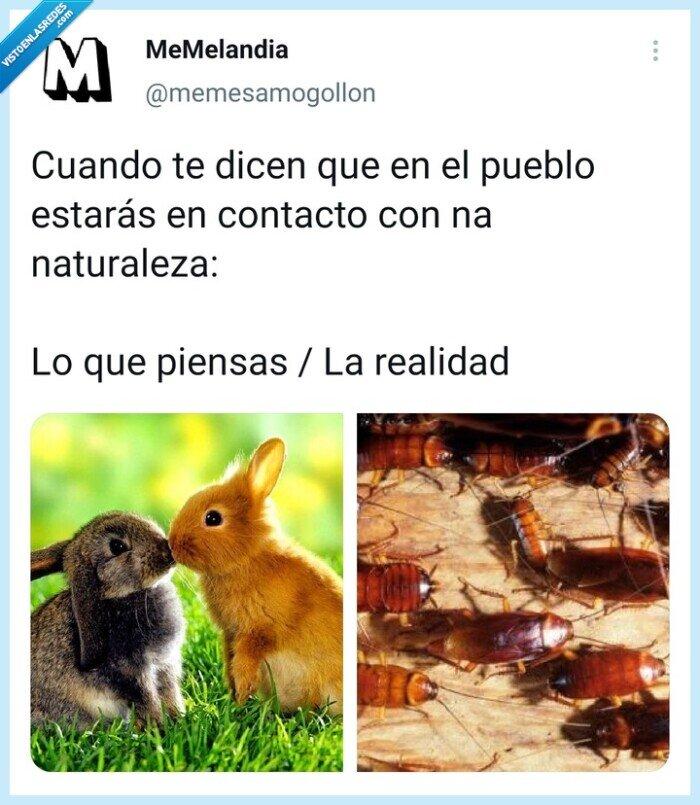 bichos,naturaleza,Pueblo
