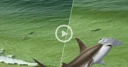 Enlace a Un tiburón martillo va como un loco a atacar a este bañista despistado y en el último segundo cambia de opinión