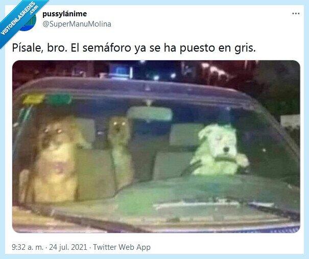 gris,perros,semáforo