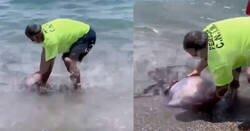 Enlace a Sacan una medusa XXXL del mar y yo veo eso y empiezo a correr hasta que no me quedan suelas, por @correoaxarquia