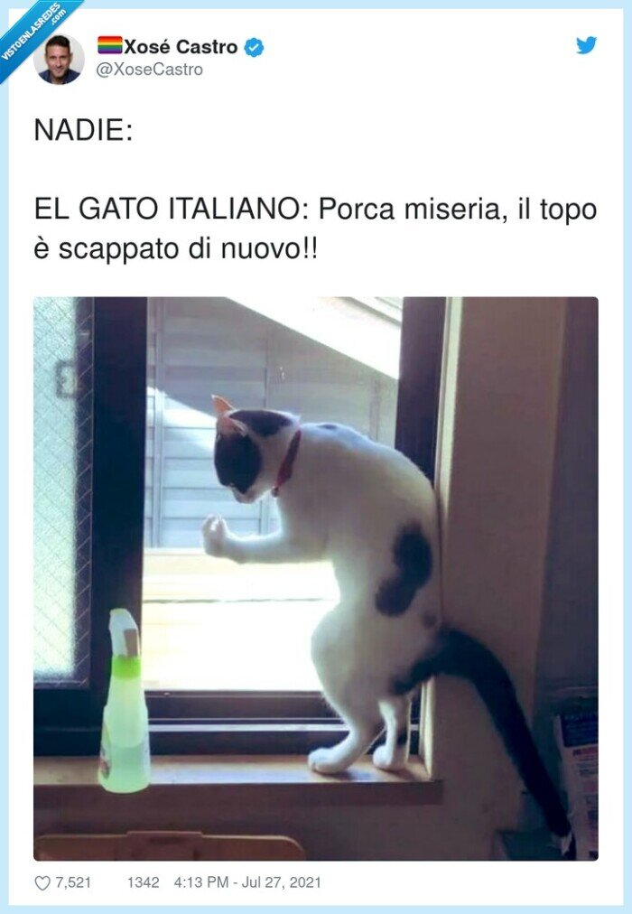 gato,italiano,miseria,nadie,porca,scappato