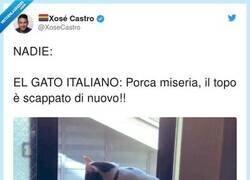 "Enlace a ""Cat-zo!"", por @XoseCastro"