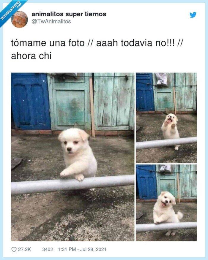 foto,perro,tómame