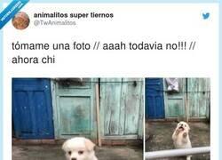 Enlace a Perros que posan mejor que tú, por @TwAnimalitos