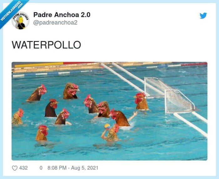 pollos,water,waterpolo