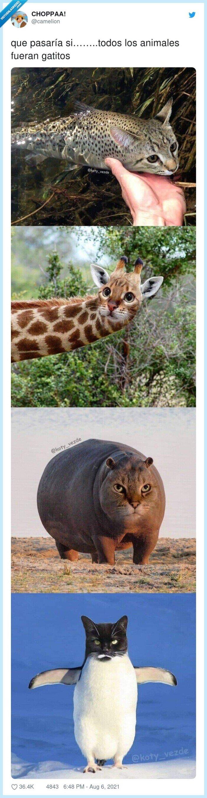animales,gatos,todos