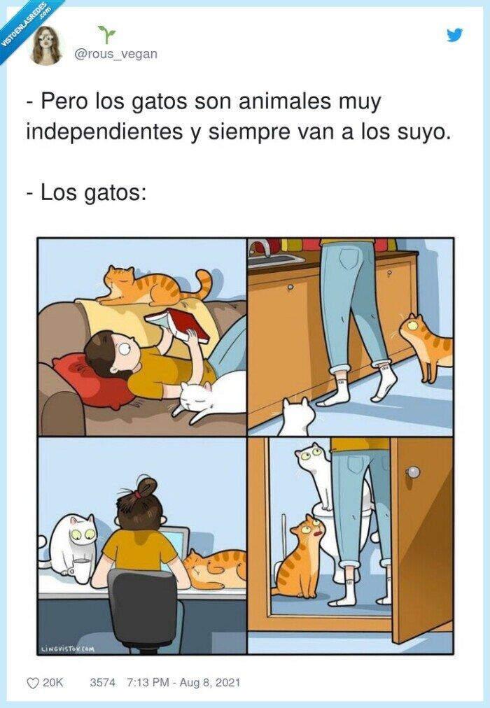 animales,gatos,independientes