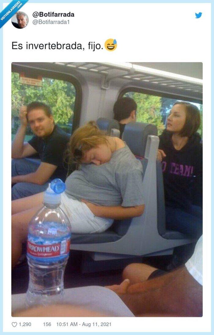 autobus,dormida,invertebrada,plegada