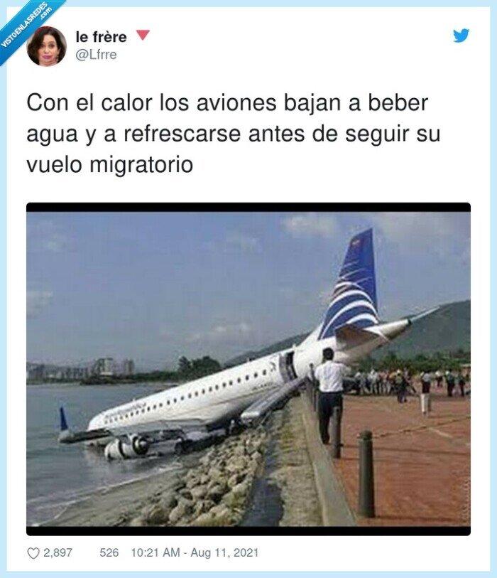 aviones,calor,migratorio,refrescarse