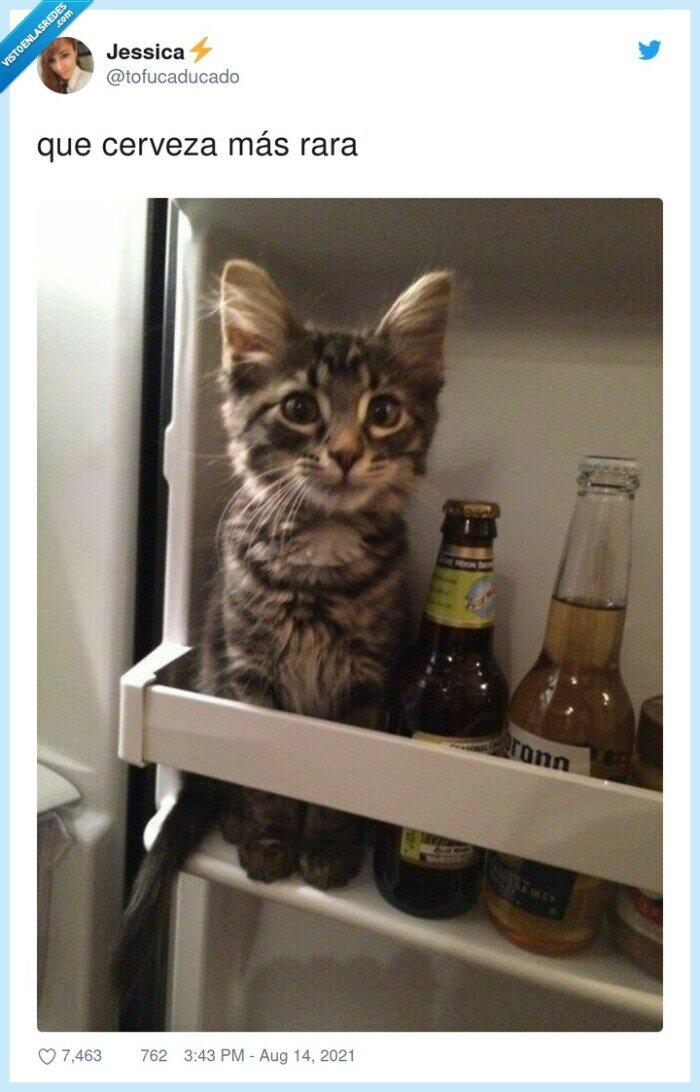 cerveza,gato,nevera,rara