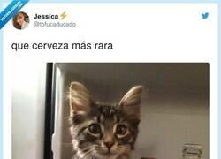 Enlace a Es una Miau, por @tofucaducado