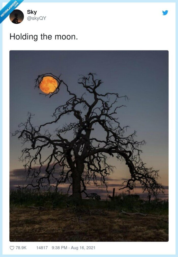 árbol,foto,luna,sostener