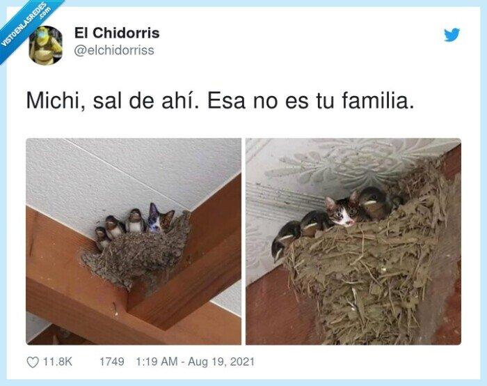 familia,gato,nido,pájaros