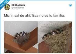 Enlace a No me engañas, paso de ir al veterinario, por @elchidorriss