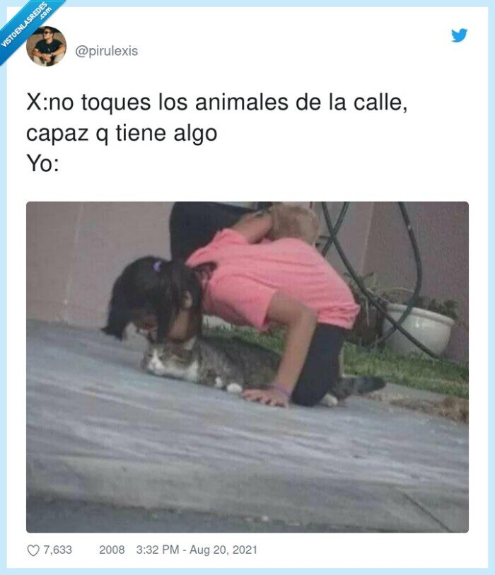 animales,calle,gatos,tocar