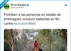 Enlace a Es que los elefantes lo debían flipar, por @ActualidadRT
