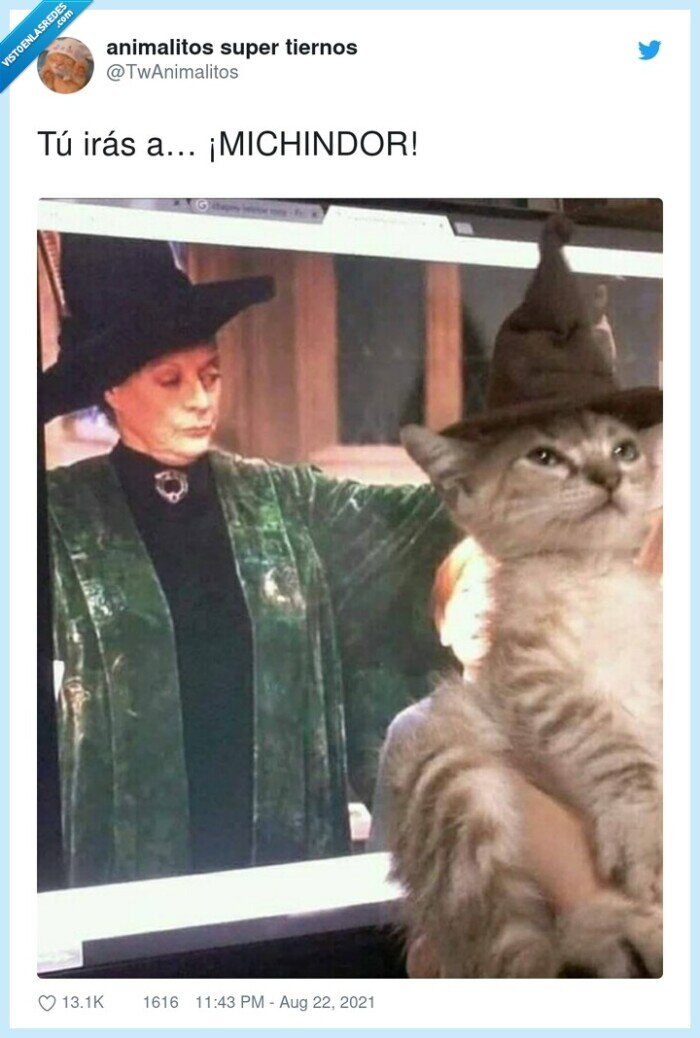gato,harry potter,michindor