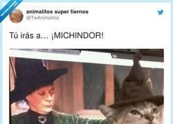 Enlace a En cambio mi gato es un maldito muggle, por @TwAnimalitos