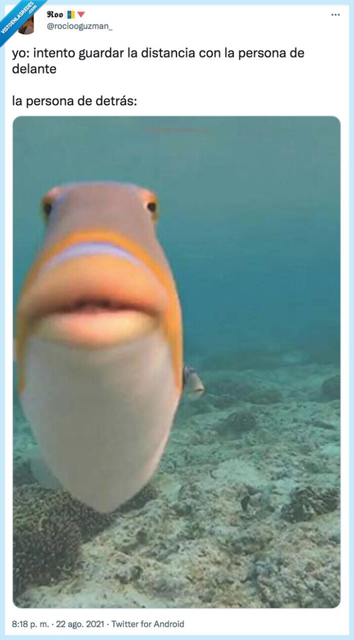 detrás,distancia social,encima,pez