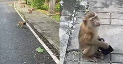 Enlace a Un mono se encuentra una mascarilla por la calle y hace lo que muchos humanos pasan de hacer