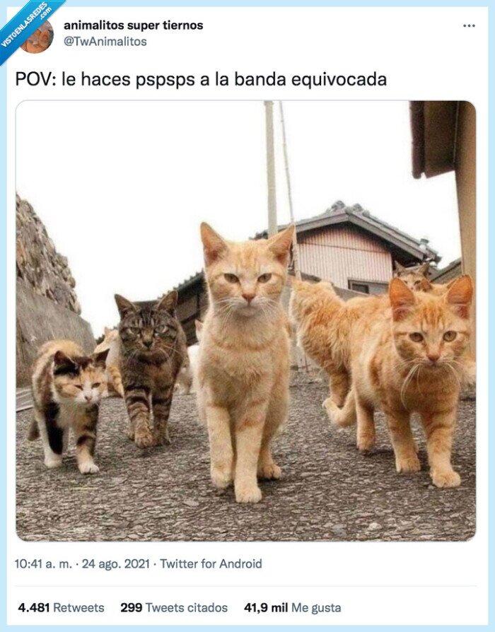 gatos,pspspsps