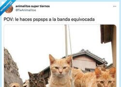 Enlace a The Kitty Blinders