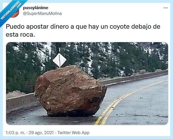 apostar,coyote,roca