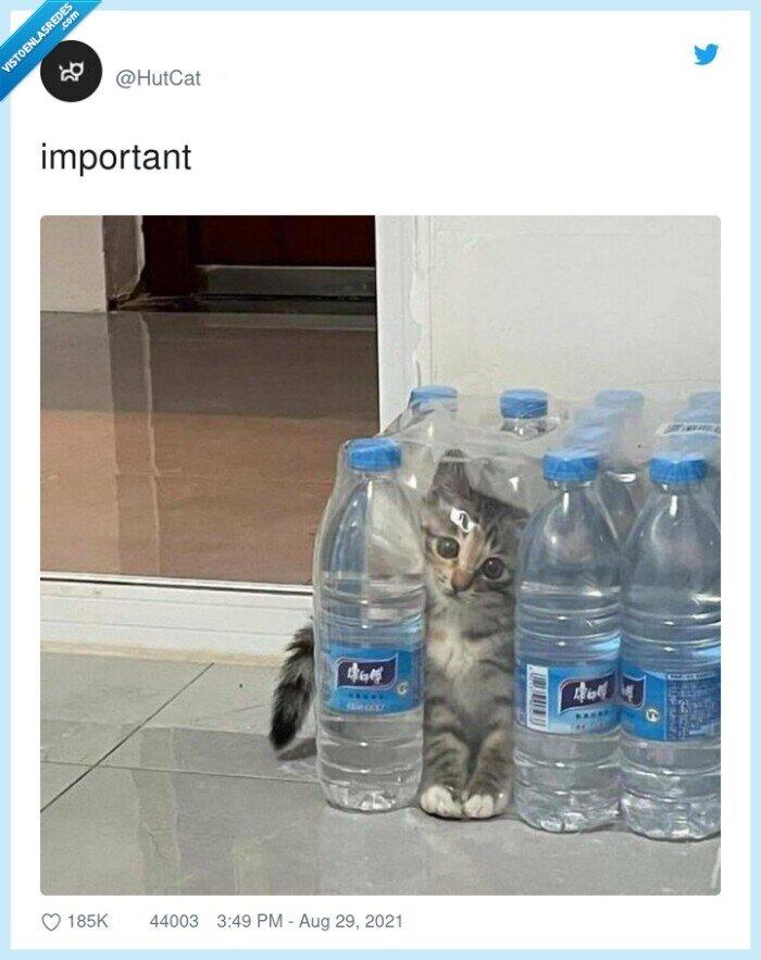 botellas,gato
