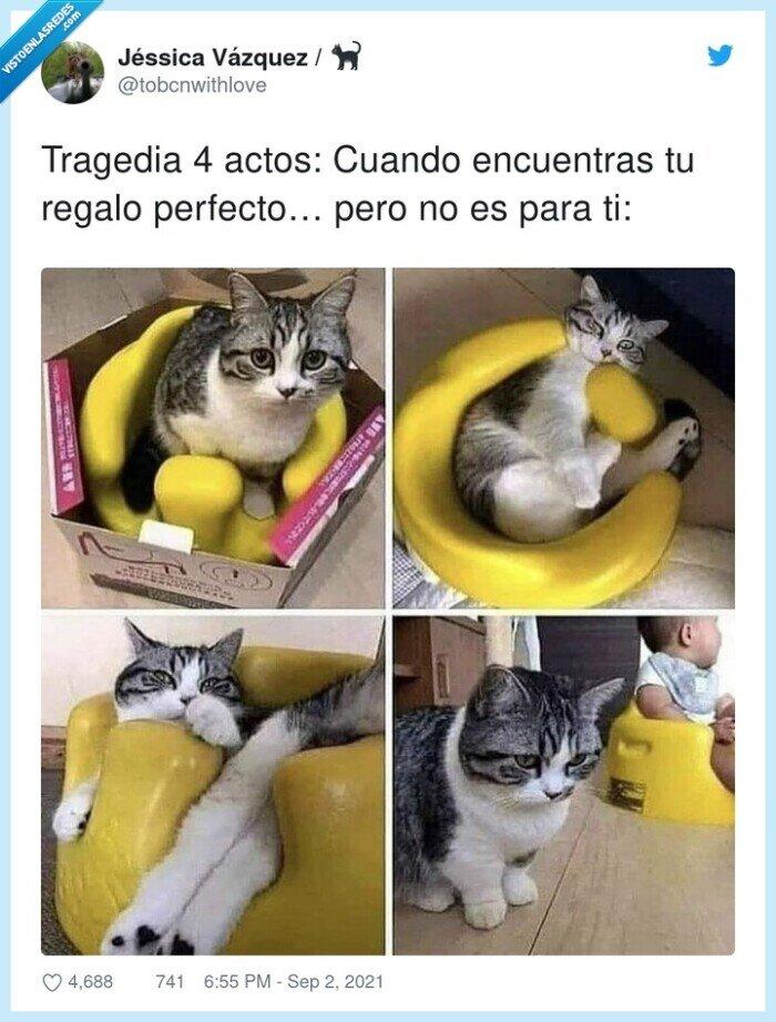 actos,cuatrp,gato,regalo,tragedia