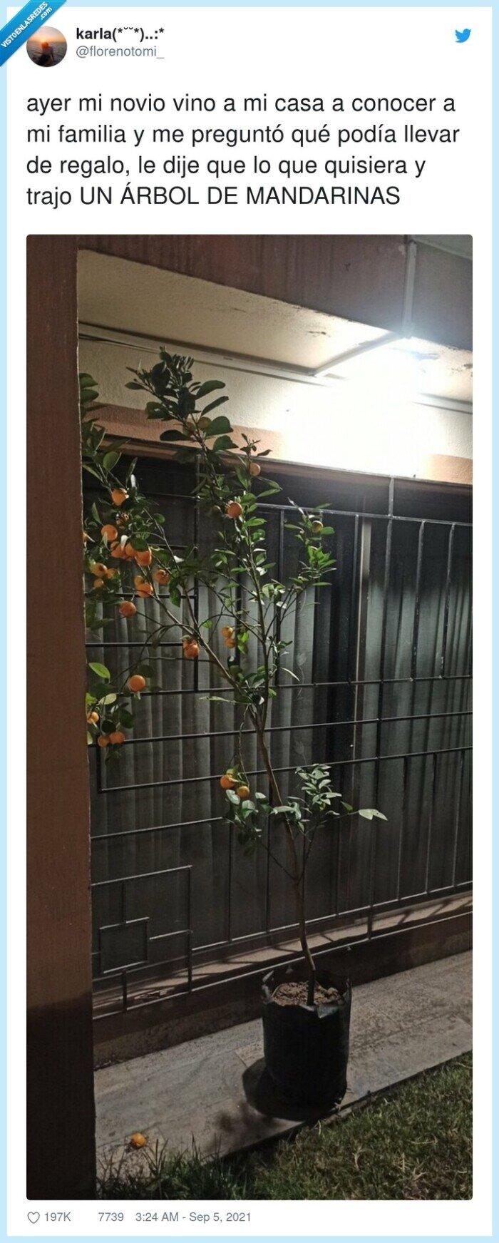 árbol,conocer,familia,mandarinas,regalo