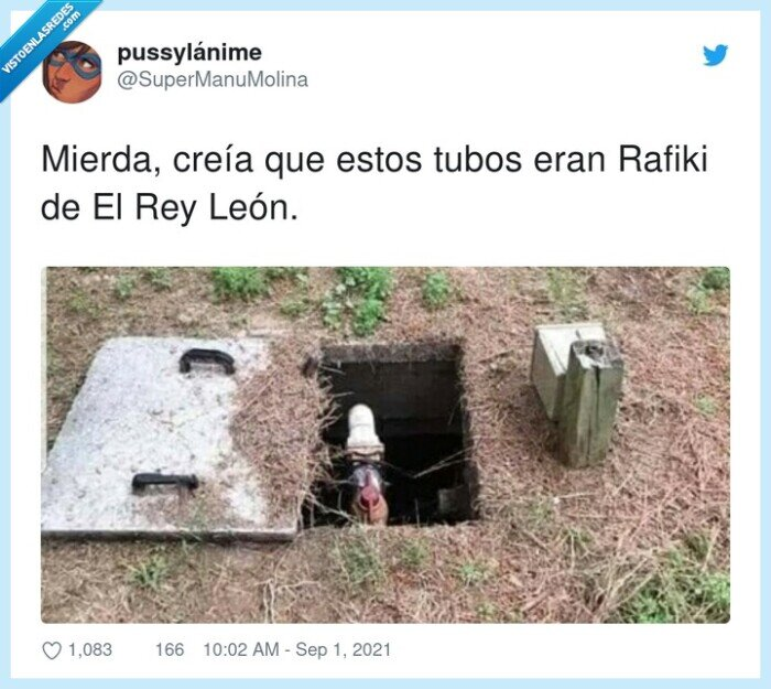 león,rafiki,rey,tubos