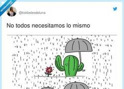 Enlace a No hombre, no, cactus , por @kskbelesdeluna
