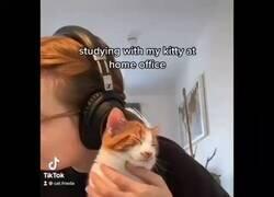 Enlace a Te amamos, gatito ayudante de estudio , por @Susasun