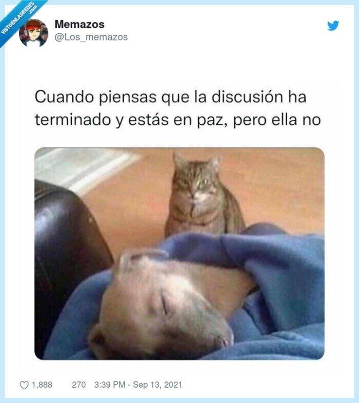 discusión,en paz,enfadado,gato,pareja