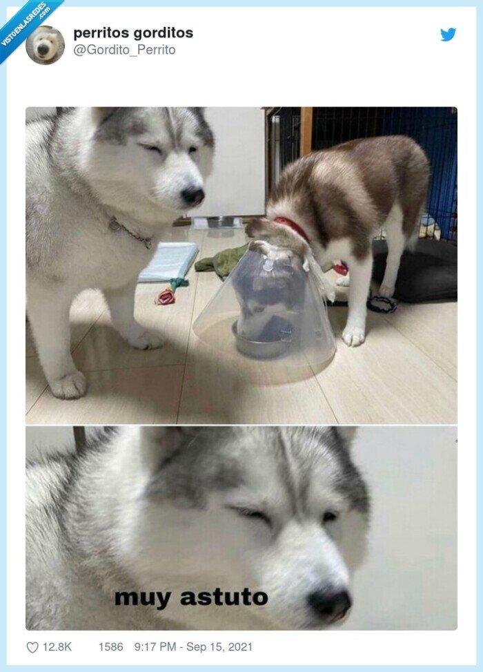 comer,cono,perro