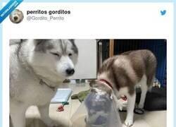 Enlace a Esto requiere mucha experiencia, por @Gordito_Perrito