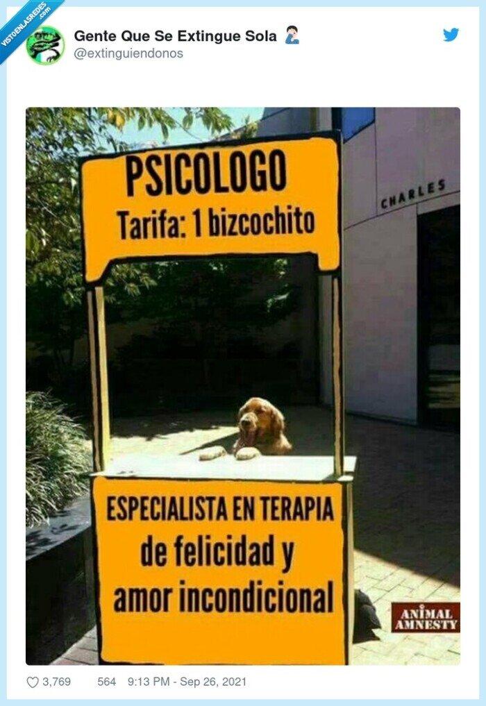 bizcocho,perro,terapia