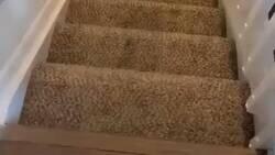 Enlace a Imagina tener este perro y verlo bajar por las escaleras, por @Gordito_Perrito