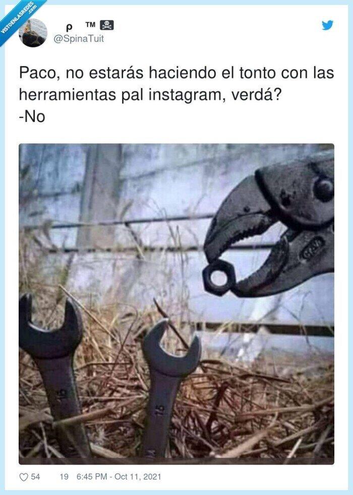herramientas,instagram,paco,pájaros,tonterías