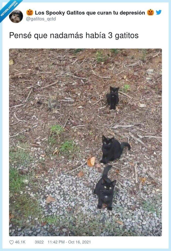 camuflaje,gatos,negros